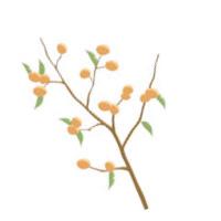 柿葉のイラスト